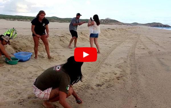 Releasing Baby Sea Turtles