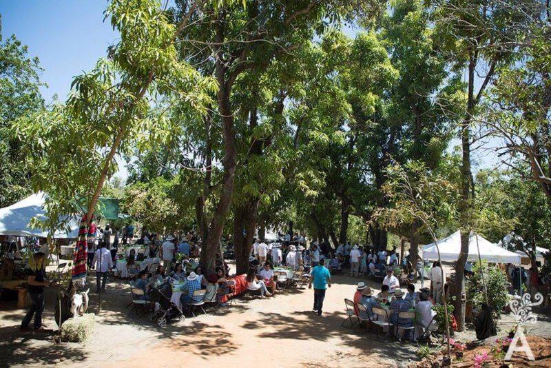 Festivals in Los Cabos