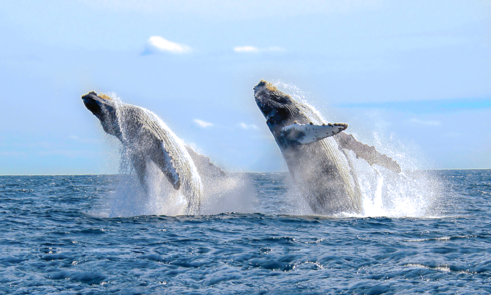 Whale watching season in Los Cabos!